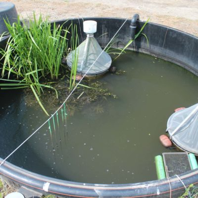 Mesocosm with macrophyte table (litoral zone) and various samplers