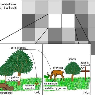 Darstellung des Modellkonzepts zum GrasS-Modell
