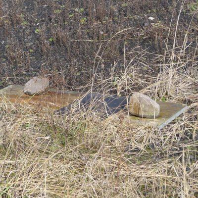 Schlangenbretter: Künstliche Verstecke als Fanghilfe für Reptilien und Amphibien