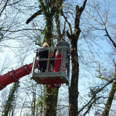 Erfassung von Baumhöhlen: Quartierbäume für Fledermäuse