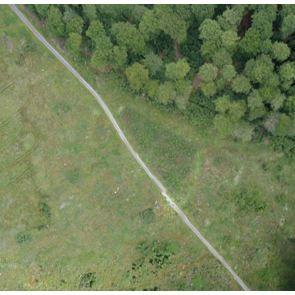 Drohnen-Aufnahme einer Kyrill-Windwurffläche