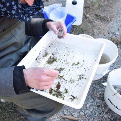 Sortierung von Gewässerorganismen